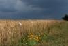 Avant l'orage / Michel Ramos